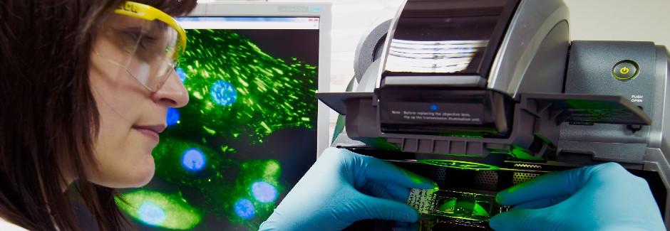 Mikroskop, Leuchtstoff, Luminseszenz