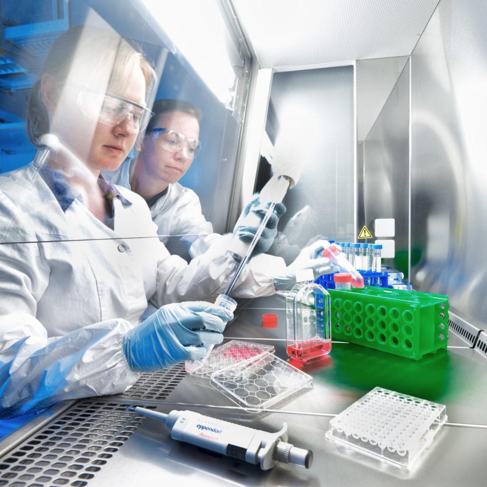 Zwei Wissenschaftlerinnen arbeiten mit Schutzausrüstung in einer Sterilbank